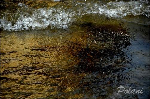 exuberance-doree-lancieux-2014_0240.JPG