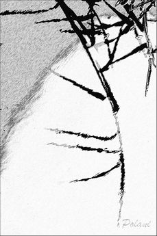 fusain-pf_0464.jpg