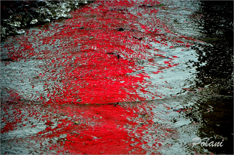 ondes-vermillon-lancieux-2014_0112.JPG