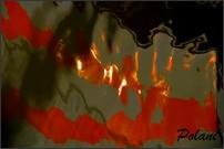 passion-photo-a-fleur-d-eau-0713P.JPG