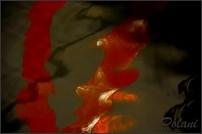 passion-photo-a-fleur-d-eau-0728P.jpg