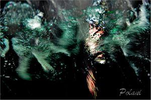 Polani-P_0132.jpg