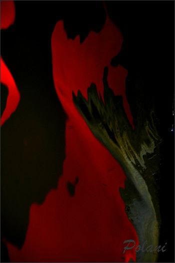 rouges-reflets-de-lyvet-08-09-2013_0337.JPG