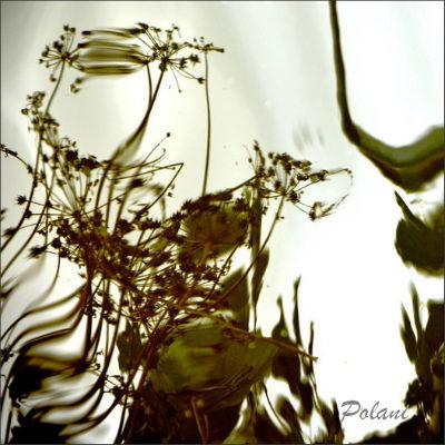 végétal-dinan-2013_0535.JPG